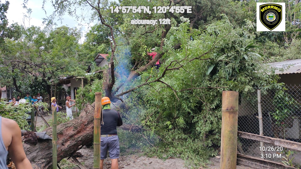 Salvaging of Fallen Trees due to Typhoon Ulysses
